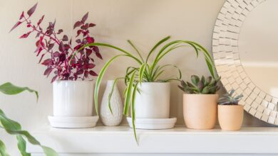 Learn These 10 Ways Of Decorating Your Interior And Exterior With Flowers