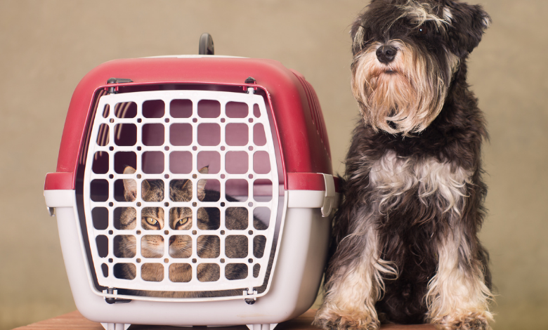 best-dog-carriers